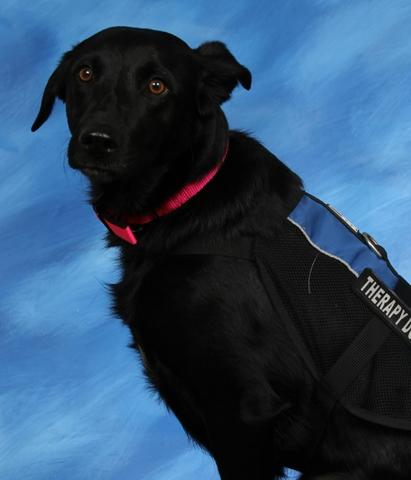 JASMINE, Therapy Dog